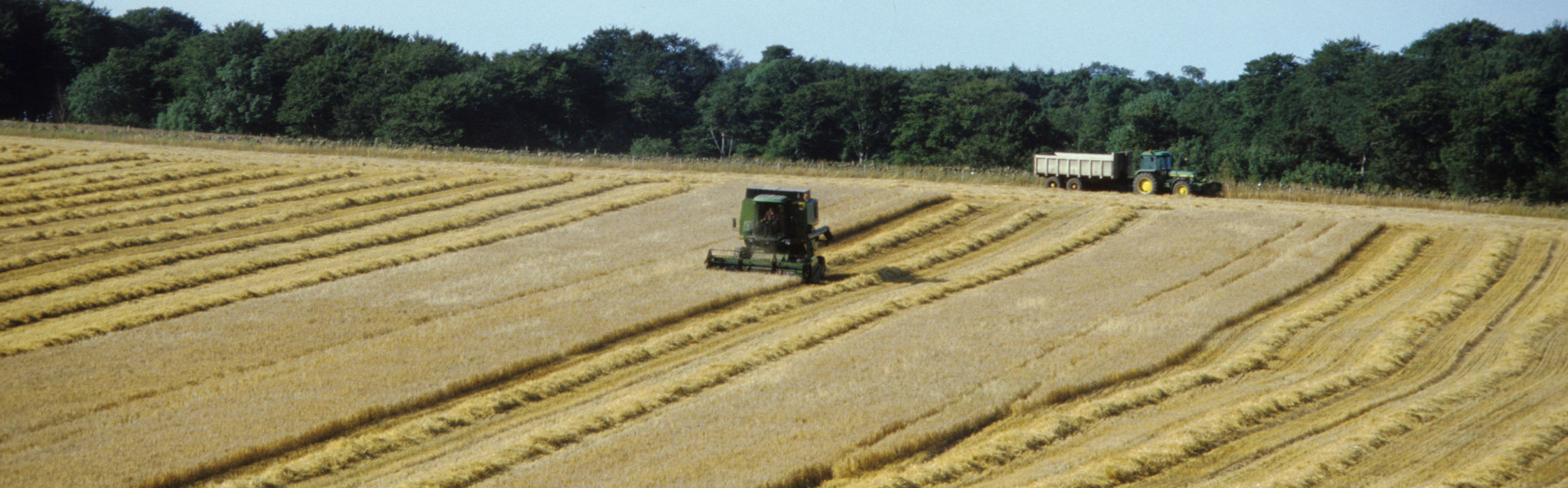 An Image of a barley field that is being harvested