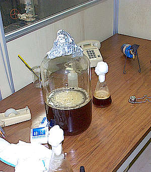 The yeast strains at the Early Times distillery