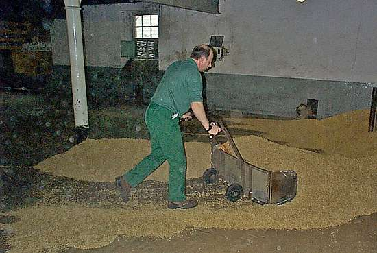 A worker sweeping up the finished malt