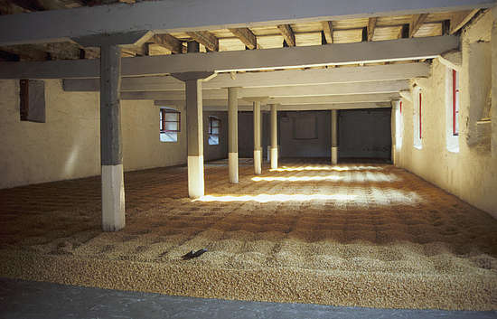 The Barley spread out on the malting floors of Glendronach