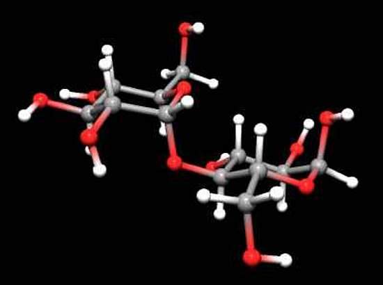 The 3D image of a Maltose molecule